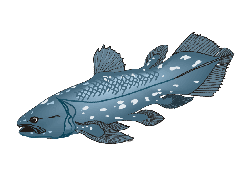 Coelacanth R2 Palaeontological Series Coin